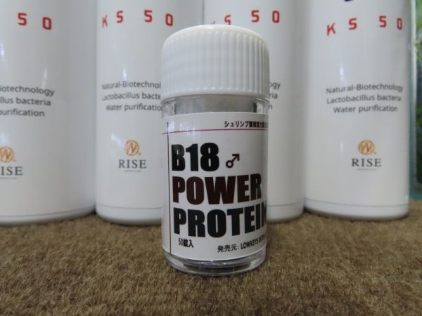 画像1: B18POWER PROTEIN50ps (1)